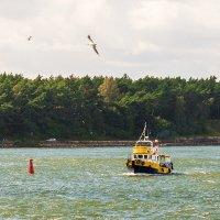 Ветреный день на заливе :: Леонид Соболев