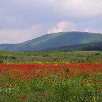 Крымский пейзаж :: Ната Волга