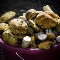 Белые грибы! :: Ирина Антоновна