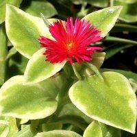 Какой-то цветок. :: Ольга Крылова