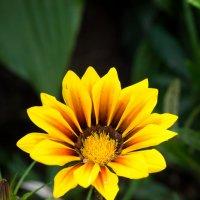 Скажите название цветка :: Alex Bush