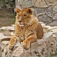 Царь :: Светлана