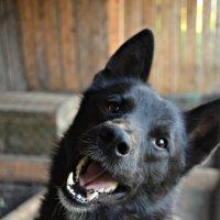 Dog :: Екатерина Малова
