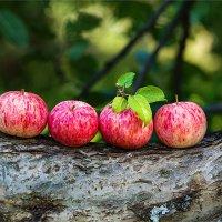 Летние яблоки :: Ирина Лепнёва