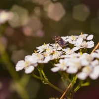 Летние цветы :: Татьяна Огаркова