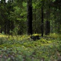 В лесу :: Екатерина Жукова