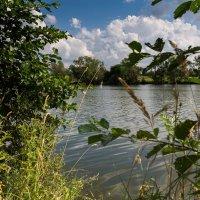 Деревенское озеро. :: Андрей Самсонов