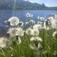Когда лето еще только начиналось... :: Ирина