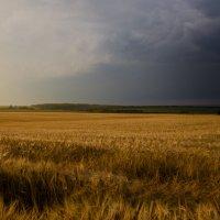Ячменевое поле :: Вера