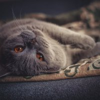 Уютный котик :: Ольга Перевалова