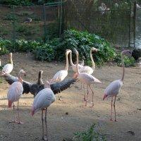 Фламинго :: Любовь Бутакова