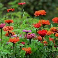 Во саду ли в огороде...... :: Paparazzi