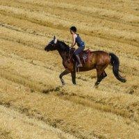 На коне :: Eugen Pracht