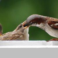 ворбушки :: linnud