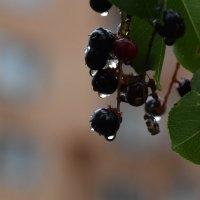 После дождя :: Gudret Aghayev