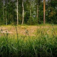 Хорошо в лесу! :: Владимир Шошин