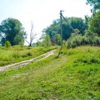 Дорога в лес :: Света Кондрашова