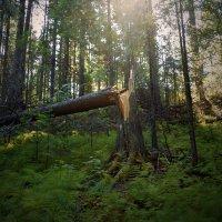 Ханты-Мансийск, сказочный лес :: Михаил Рехметов