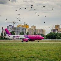 Птицы... :: Сергей Офицер
