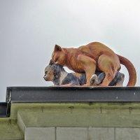 Жизнь на крыше :: Alexandr P