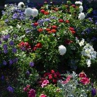 Разноцветное лето :: Вера Андреева