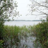 Лесное озеро :: Владимир Левый