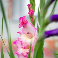 Цветок :: Анастасия Мойсук