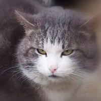 Вышел котик из тумана :: Фотогруппа Весна.