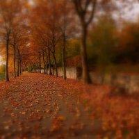 Осень... :: igor