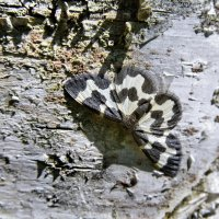 Бабочка :: Сергей Сёмин