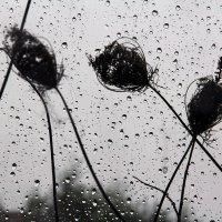 когда в городе дождь.... :: Дарья Садовникова