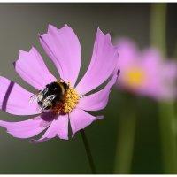 Сладкоежка и цветок. :: Paparazzi