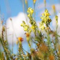 Полевые цветы. :: Инна Малявина