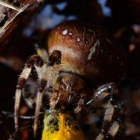 логово паука :: Сергей Ивков