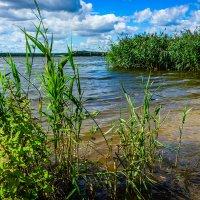 Река Нямунас (Неман) возле Каунаса, Литва :: Vsevolod Boicenka