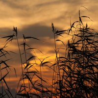 Плавилось небо в вечернем огне... :: Дмитрий Костоусов
