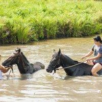 Купание лошадей :: Андрей Мартынюк