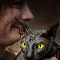 Любимый кот :: Наталья Мячикова