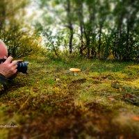 ФотоОхота :: Yuri Mekhonoshin