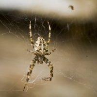 паук :: Евгений