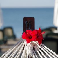 Пляжный гамак :: Лариса Журавлева