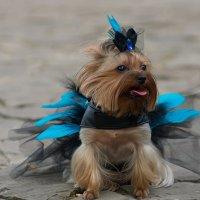 Fashion dogs :: Ivan teamen