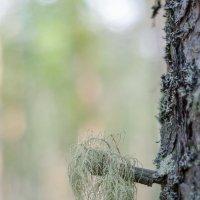 Дерево-мальчик :: -somov -