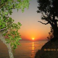 закат меж сосен пляшет :: Ксения смирнова