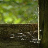 дело паука :: Михаил Жуковский