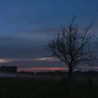 Туман :: Alex Bush