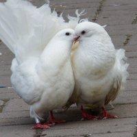 Ты меня любишь? :: Дмитрий Сиялов