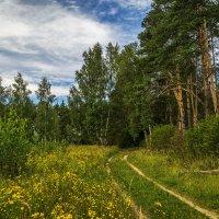 Вот и август :: Андрей Дворников