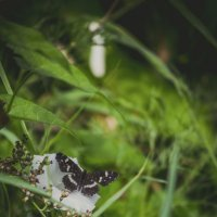 butterfly :: Милана Лесова