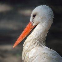 Птица, приносящая счастье в дом :: Лидия Цапко